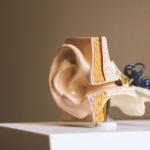 Pericoloso legame fra carenza di udito e declino cognitivo